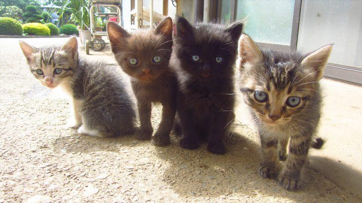 4匹の子猫と戯れたよ♪