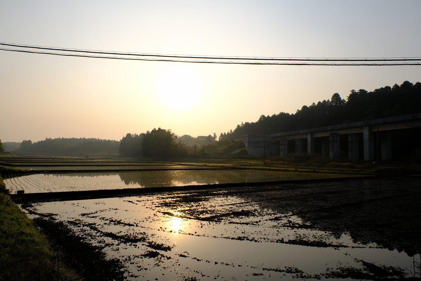 田んぼ 綺麗 風景 反射